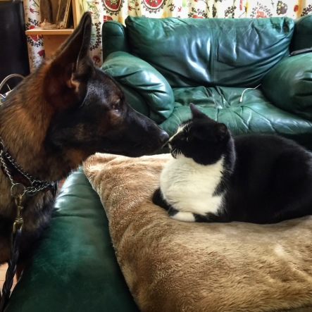 Residency guest Huck meeting Kabler kitty Oki.