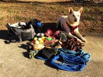 Daisy ready to train!