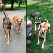 Mattie and Gidget are much calmer and well behaved after their Kabler training.