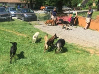 David's invitation only group socials help your best friend learn how to run with other dogs.