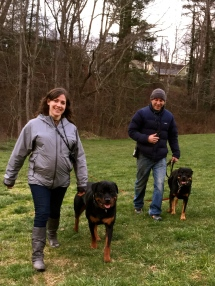 Happy guardians out practicing Buck and Sophia's walk in their off leash obedience course.