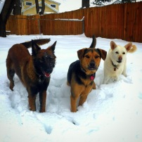 Fury and Daisy out in the snow with Residency training guest Sy.