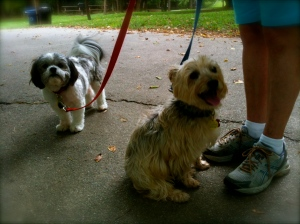 Chippie Lee and Barley learning obedience and overcoming sibling aggression together.