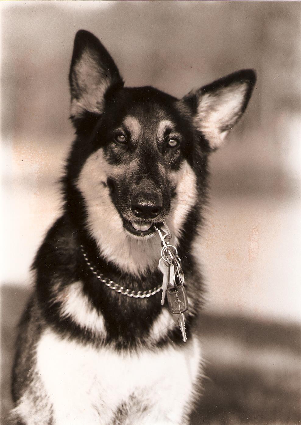Zen Dog Training