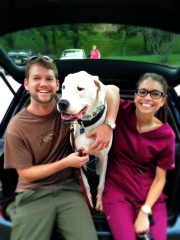 Rescued Dogo Alastair successfully worked through intense dog aggression in Kabler training.