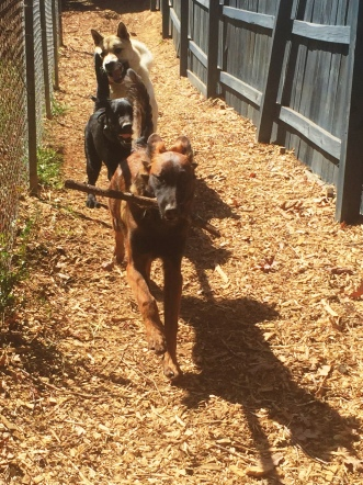 Plenty of playtime, fresh air, and exercise every day during your dogs Residency.