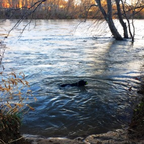Off Lead Residency guest Cato taking a late season swim during his stay at the Kabler house.