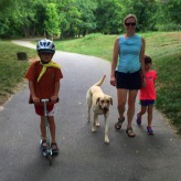 Yellow Lab Arlo and his family out practicing his off leash walk during an off leash training session.