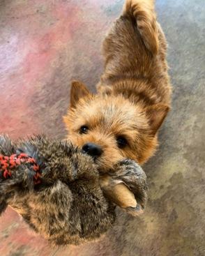 Dog training through play.