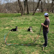 Tauga and Smalls having fun practicing long line down stays during their On Leash Training Course.
