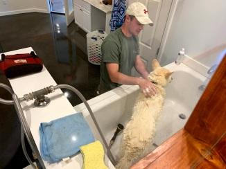 K9 Bath Time