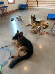 Residency guests Boots, Neva, Penny, and Mira practicing a long down stay together.